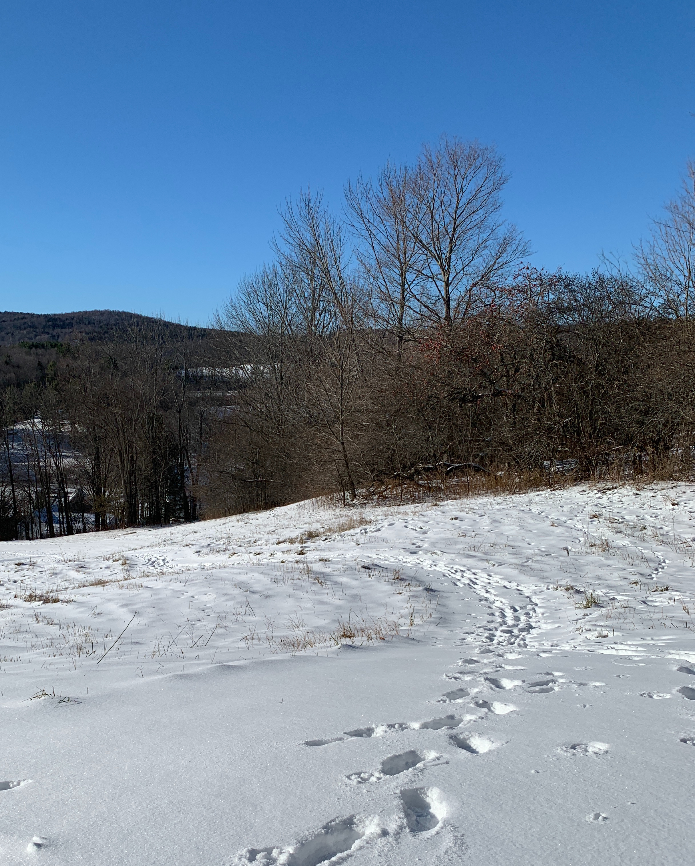 tracks-hill-snow.jpg